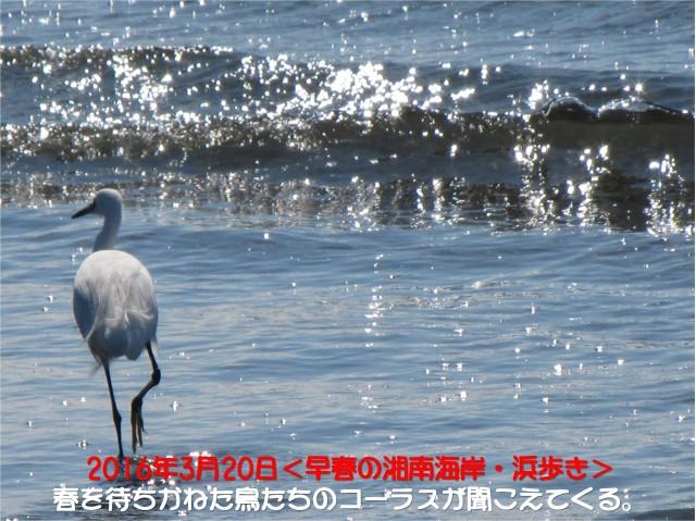 IMG_0402_キャッチ入り2
